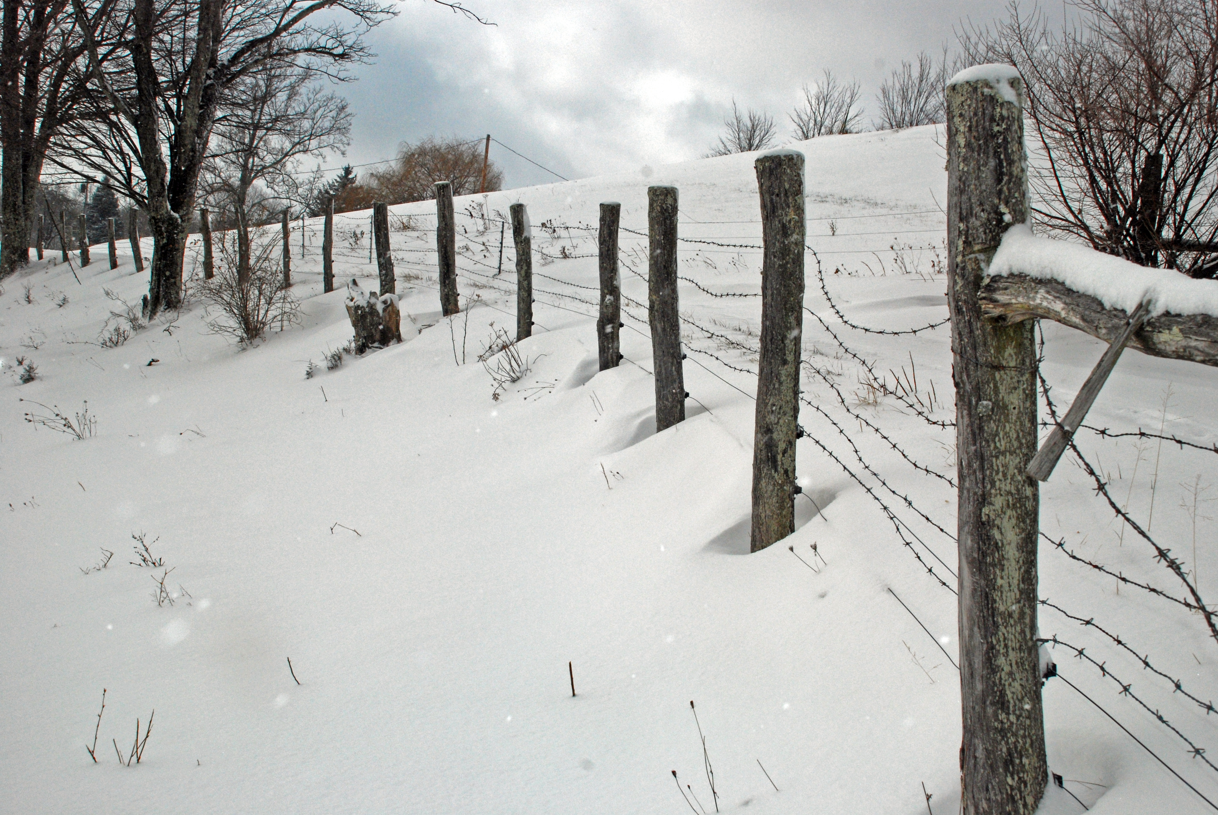 Snow, fence, and Trees 1-8-11 a